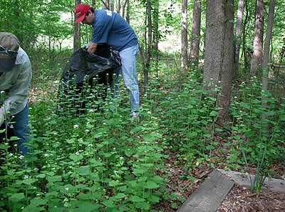 Volunteers working to clear patch of garlic mustard